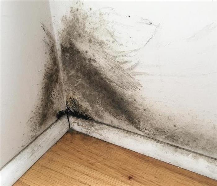 Why SERVPRO SERVPRO of Vermilion County knows what to do if mold grows in your home